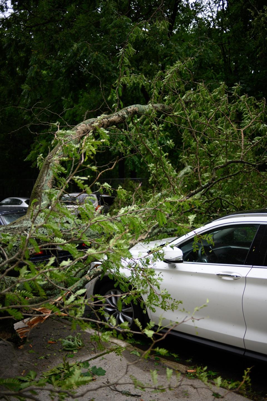 עץ נפל על מכונית